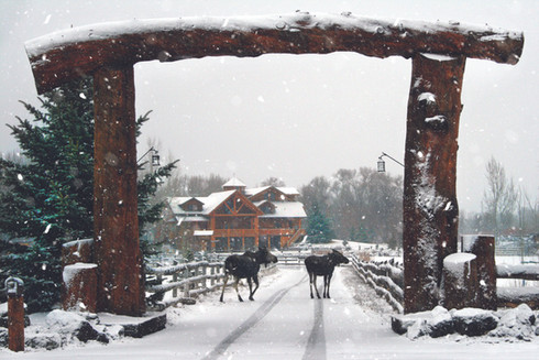 moose driveway snowfall 30x20.jpg