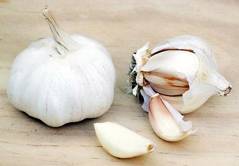 Large Garlic