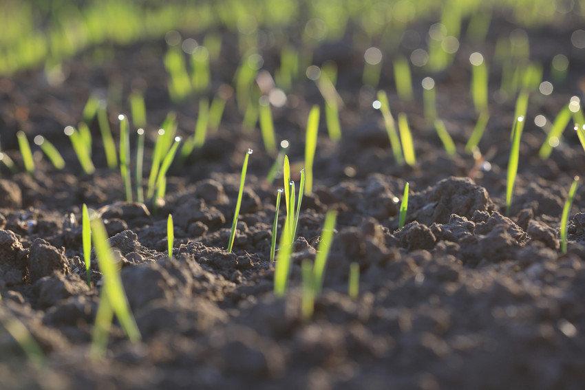 Seedlings starting to grow.jpg