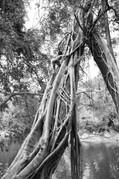 Climbing the Giant Tree