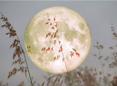 Ananda Purnima (The Most Blissful Full Moon Day of the Year)