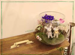 紫羅蘭盆景 $418