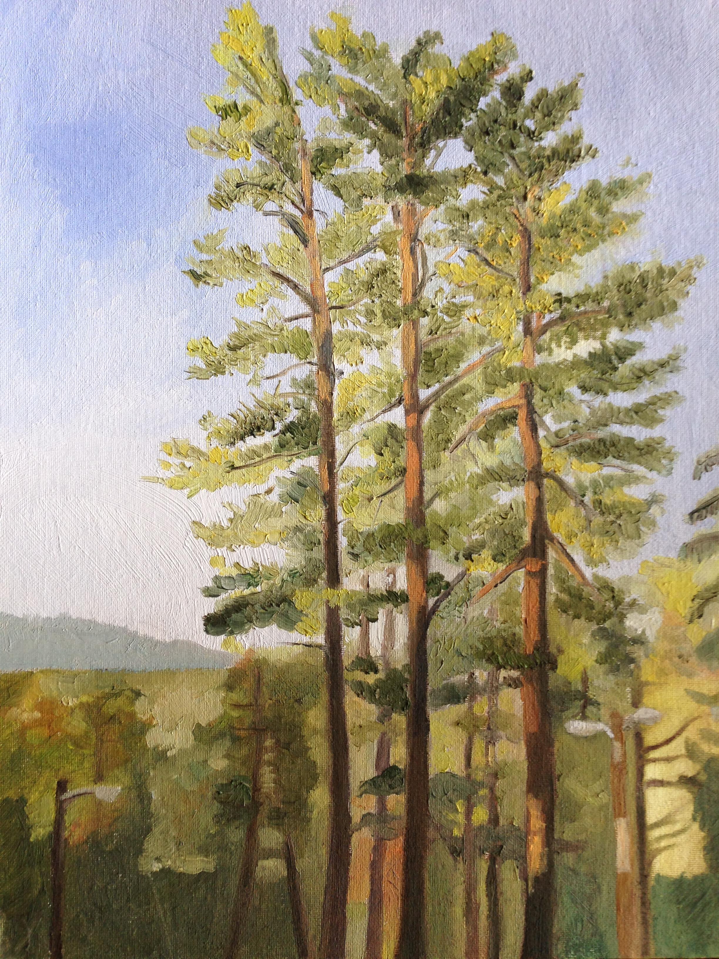 Asheville Trees