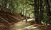 bosco di mangalaviti per escursioni in famiglia
