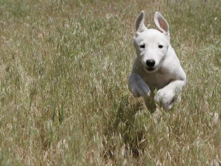 Curiosidades que no sabías de los perros
