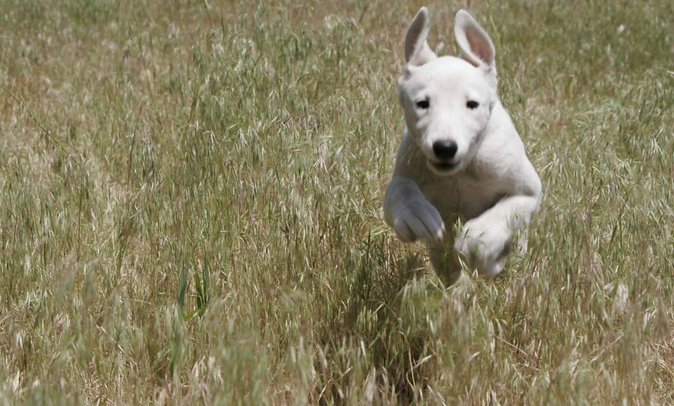 Diplom Hunde Tierheilpraktiker