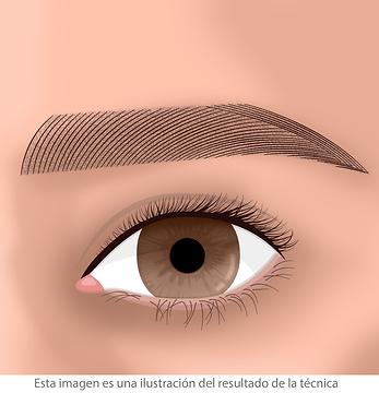 micropigmentacion de cejas masculina facialtec