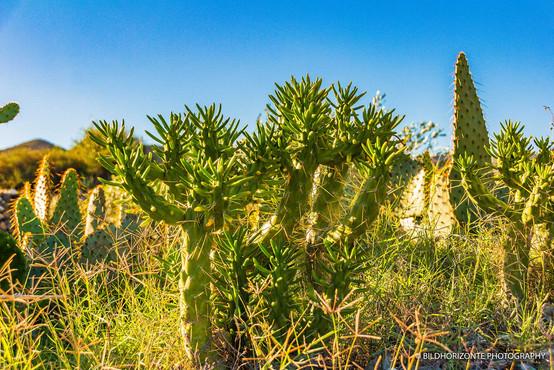 Andalusiennet.de-Naturpark-Cabo-de-Gata.