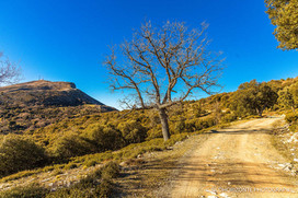 Andalusiennet.de-Sendero-a-Huelma-Sierra