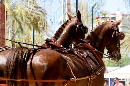 Andalusiennet.de-feria-del-caballo-Jerez-de-la-frontera.jpg