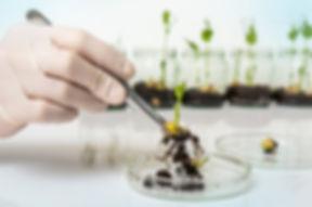 Scientist testing GMO plant in laborator