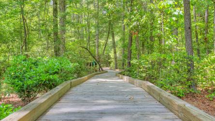 Palmetto Creek of the Carolinas
