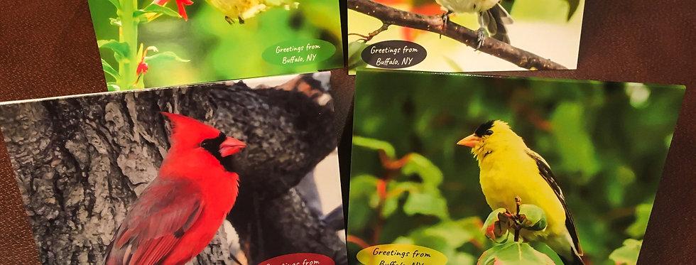 Greetings from Buffalo, NY Cards (4 pack variety)