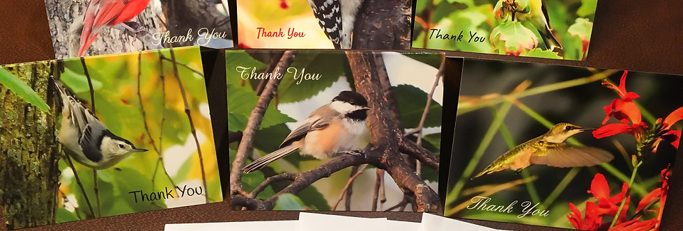 Beautiful Bird Thank You Cards (6 pack variety)