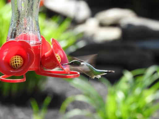 Keeping Hummingbird Feeders Clean