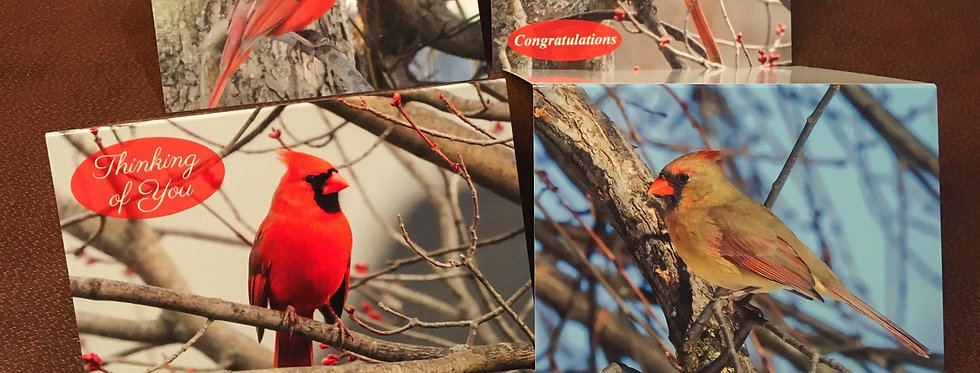 Cardinal Lovers Card Pack (4 pack variety)