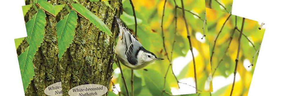 White-breasted Nuthatch Postcards