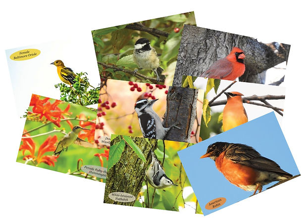 Bird Photo Postcards