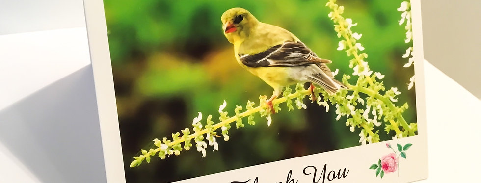 Goldfinch Thank You Cards (6 pack)