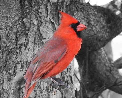Cardinal URBAN SERIES.JPG
