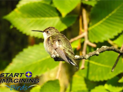 Hummingbirds are Amazing!
