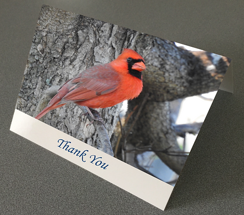 Cardinal Thank You Card Real Estate.png