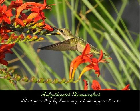 Hummingbird Inspirational Render.jpg