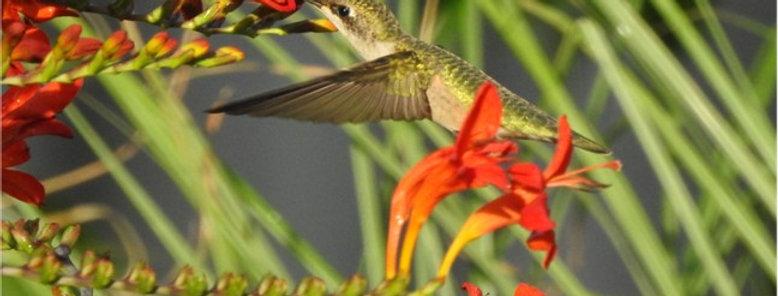 Hummingbird Inspirational Canvas Wall Art