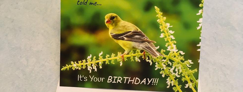 American Goldfinch Birthday Card