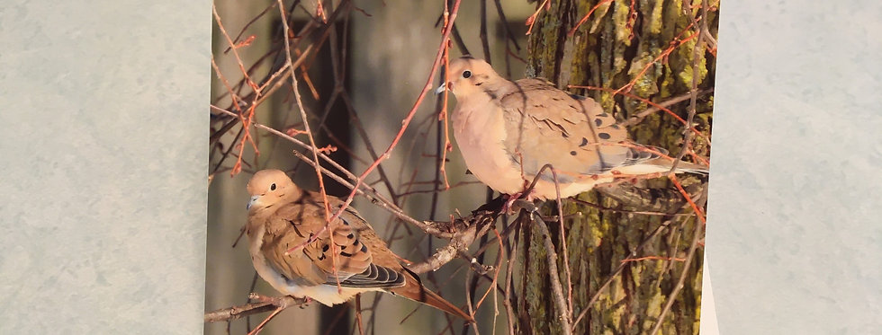 Mourning Doves Blank Note Card