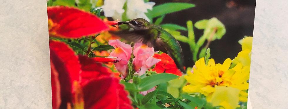 Hummingbird Congratulations Blank Note Card