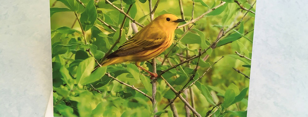 Yellow Warbler Blank Note Card