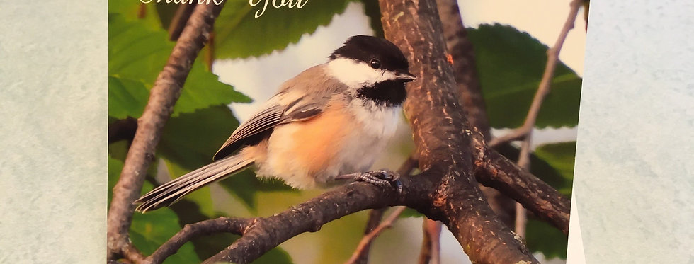 Black-capped Chickadee Thank You Card