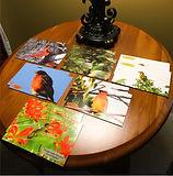 12 pack postcards.jpg