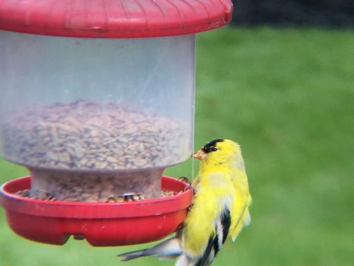 What's that bird in my backyard?