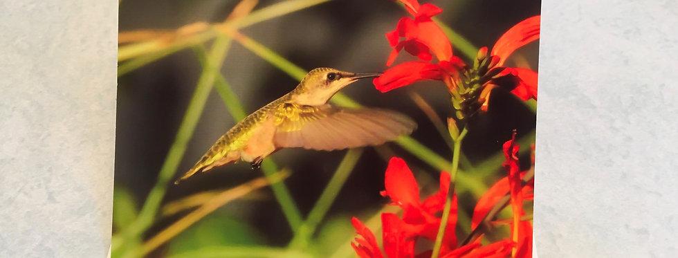 Hummingbird Blank Note Card