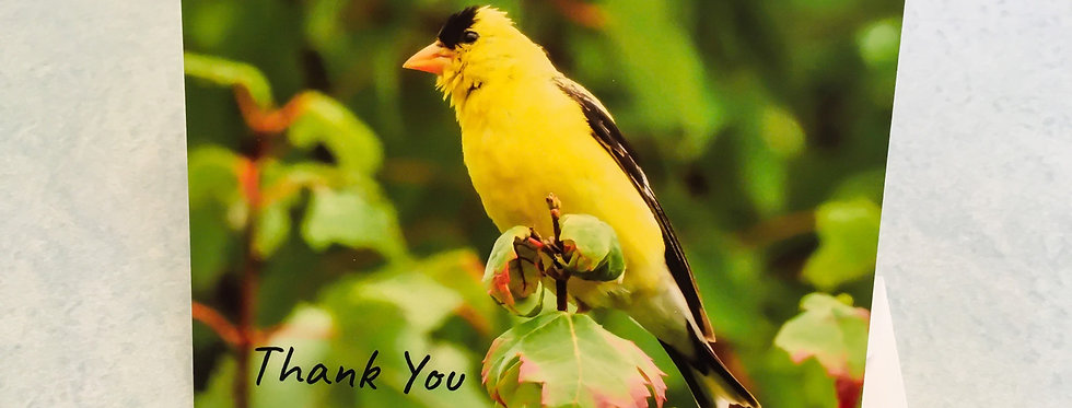 American Goldfinch Thank You Card