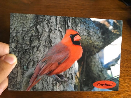 Cardinal Postcard Website JPG.jpg