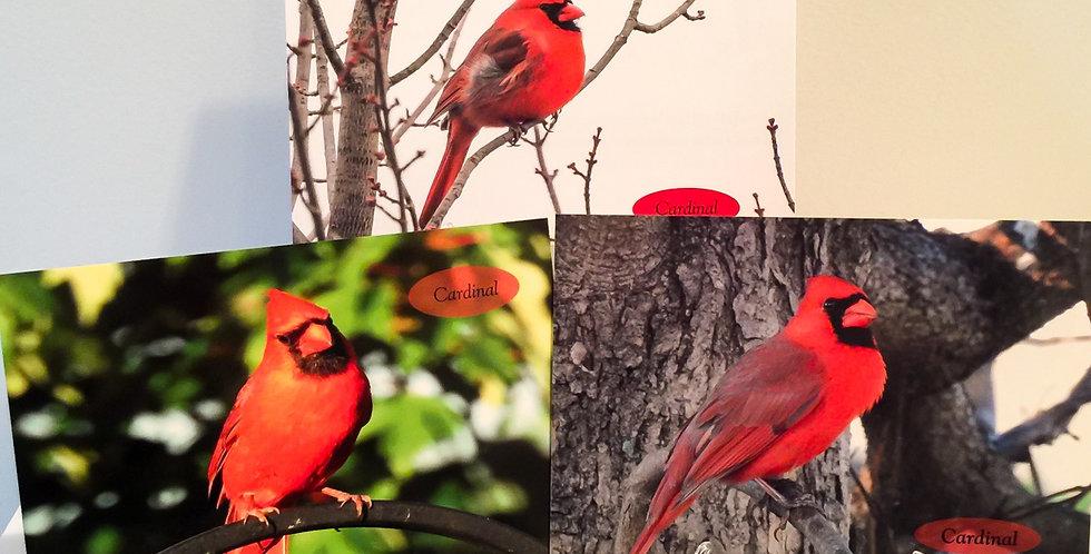 Cardinal Set (3 photos)