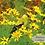 Thumbnail: Goldfinch Set (3 Photos)