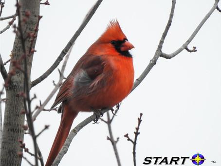 Cardinals bring smiles!