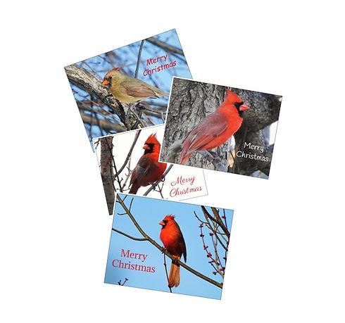 Christmas Cards Grouped.jpg