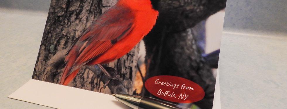 Greetings from Buffalo, NY Cardinal Card