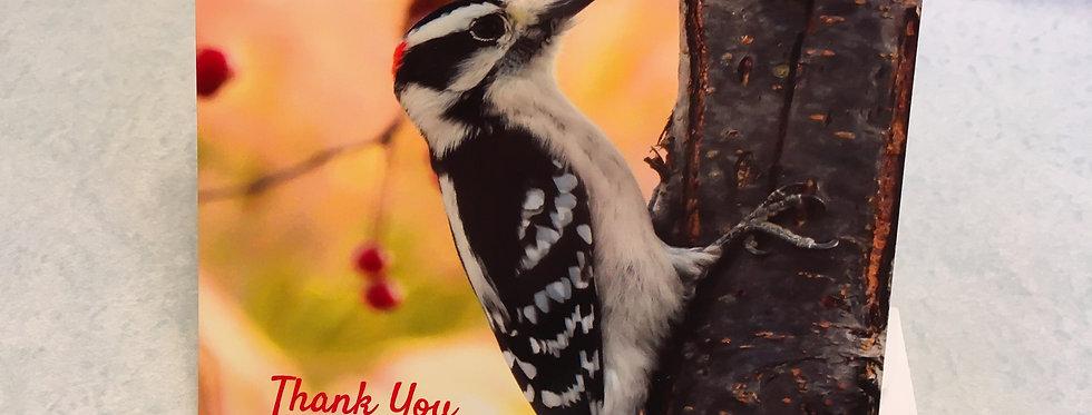 Downy Woodpecker Thank You Card