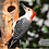Thumbnail: Red-bellied Woodpecker