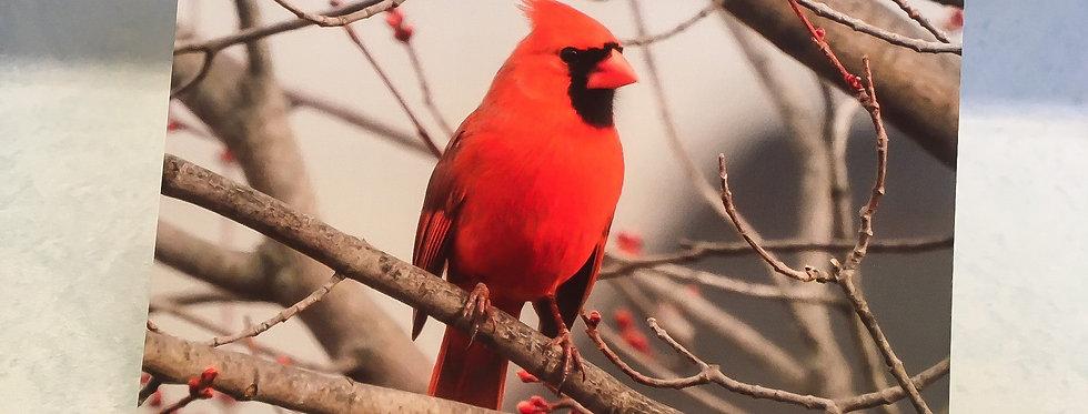 Cardinal 2 Blank Note Card
