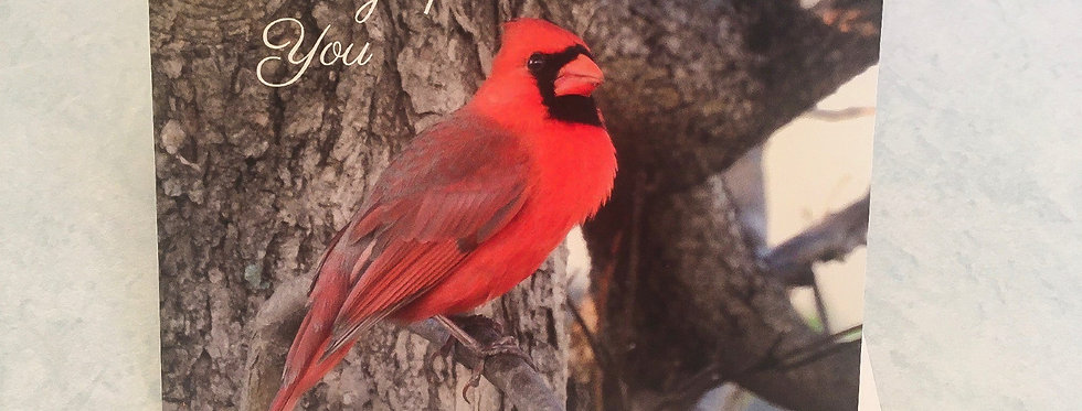 Cardinal Thinking of You Card