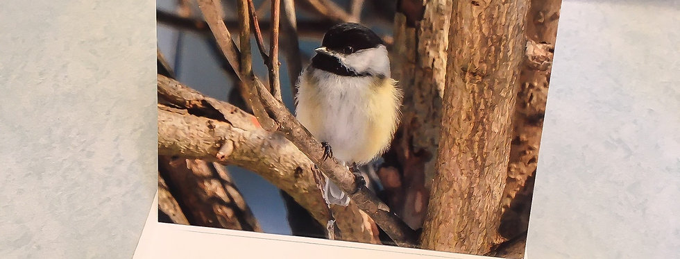 Black-capped Chickadee Blank Note Card