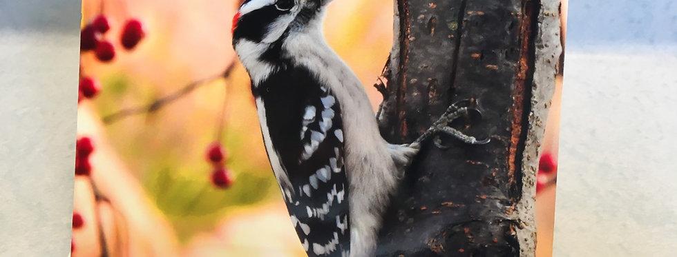 Downy Woodpecker Blank Note Card