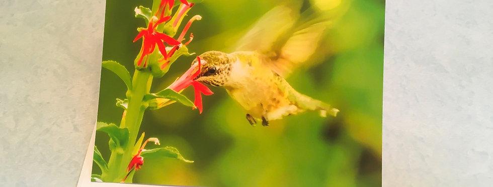 Hummingbird (Cardinal Flower) Blank Note Card